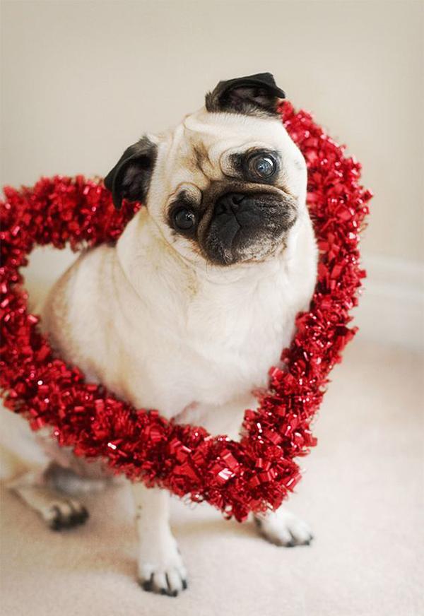 love-diy-garland-valentine-pug